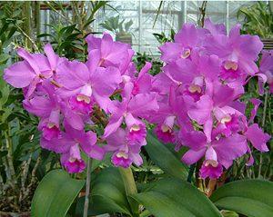 orchidsaleweb